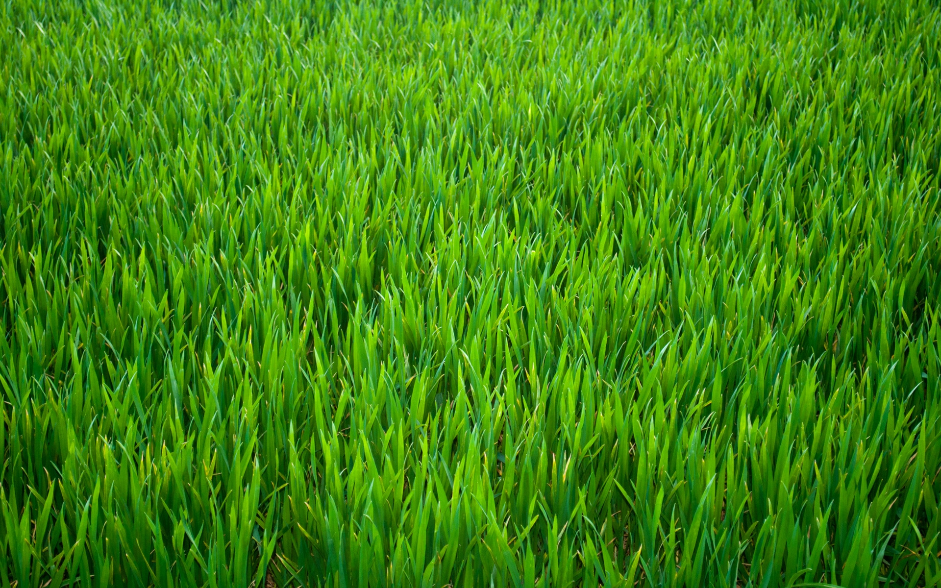 Take time to water your own grass it would be just as for Pretty grass