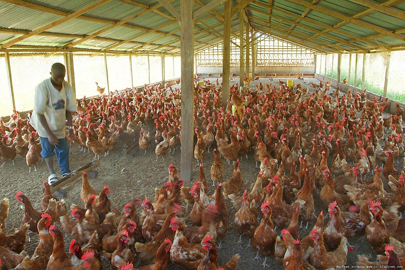How to Start Lucrative Poultry Farming in Nigeria (Best Guide)