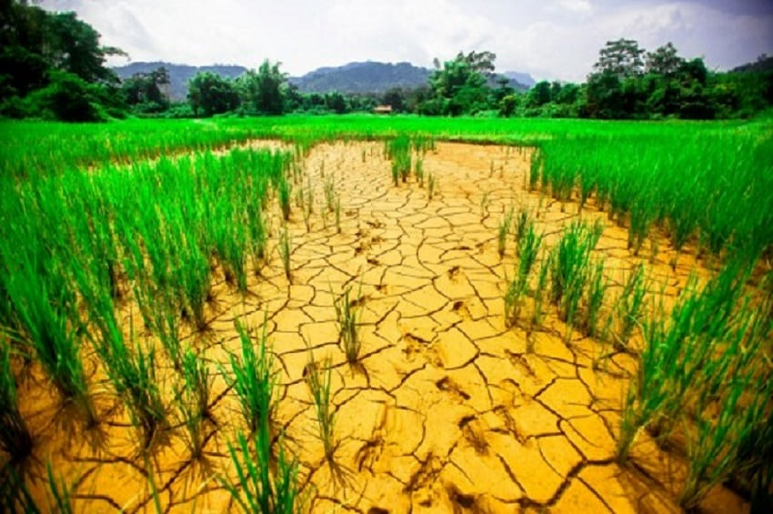 See what lack of rainfall had caused to this rice land|Photo credits: undp.org