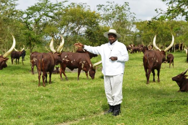 Yoweri Museveni farm