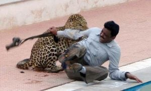 Moment Leopard attacked Wildlife expert and conservationist in India