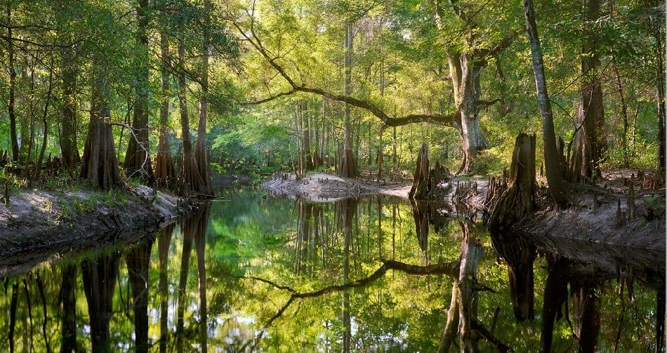 Green Swamp Florida