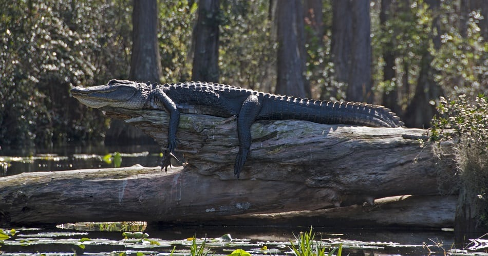 Okefenokee National Wildlife Refuge