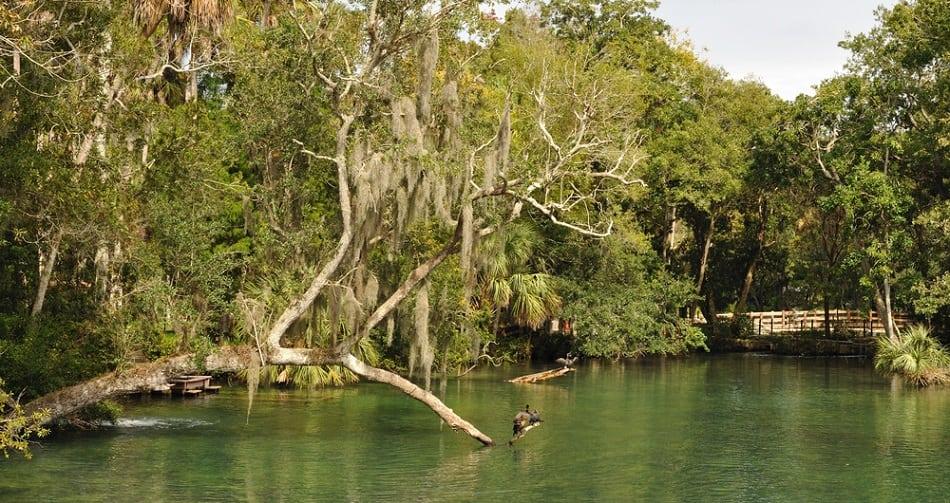 Swamp Land Music Festival