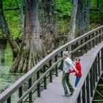 Tupelo-Bald Cypress Swamp
