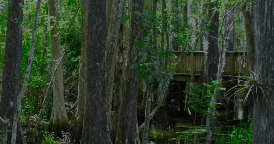 Martin County Swamp