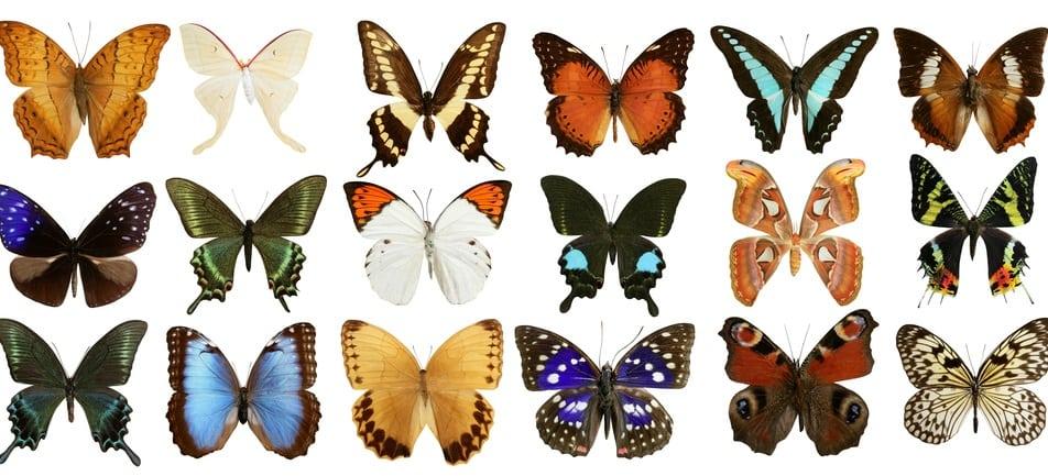 butterfly museum st tropez