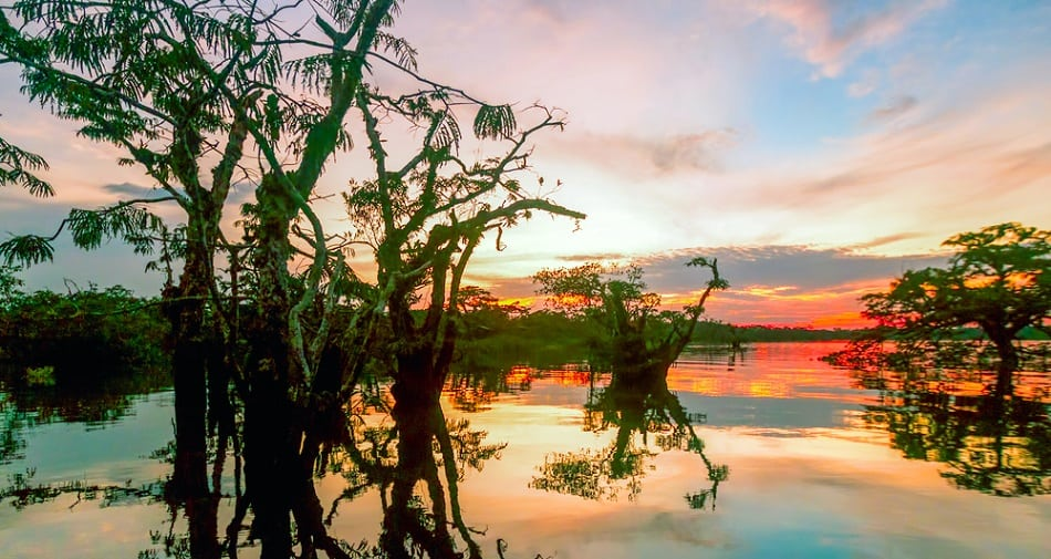 Cuyabeno Vegetation Against Sunset On Laguna Grande Ecuador