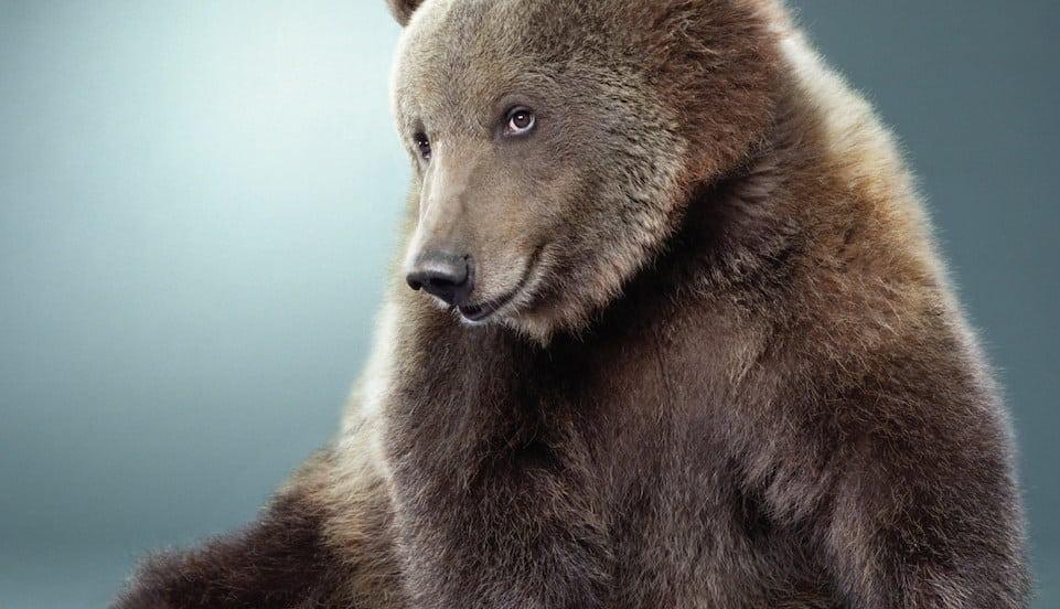 Bear Senpai- Date The Bear of Your Dreams