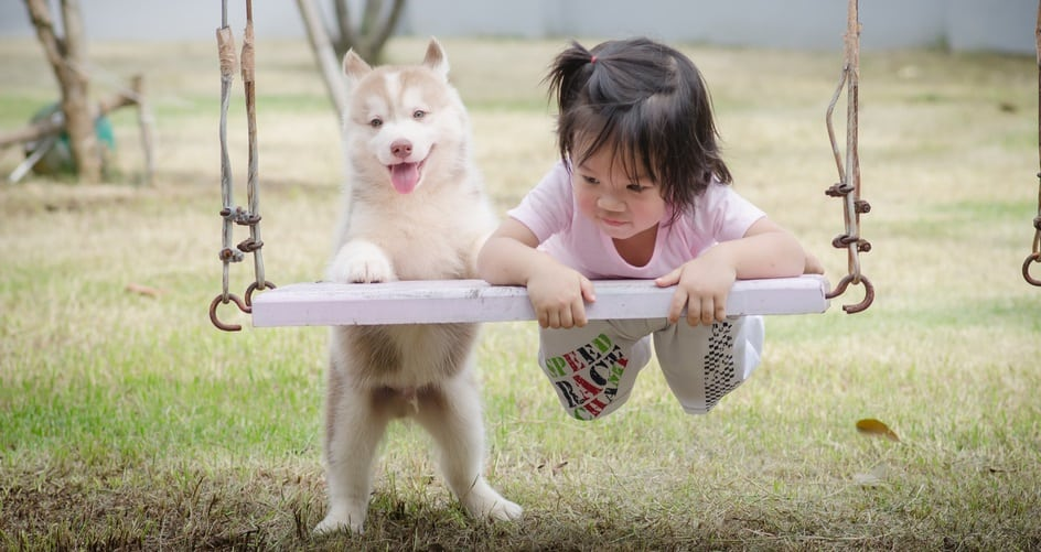child and dog on swing