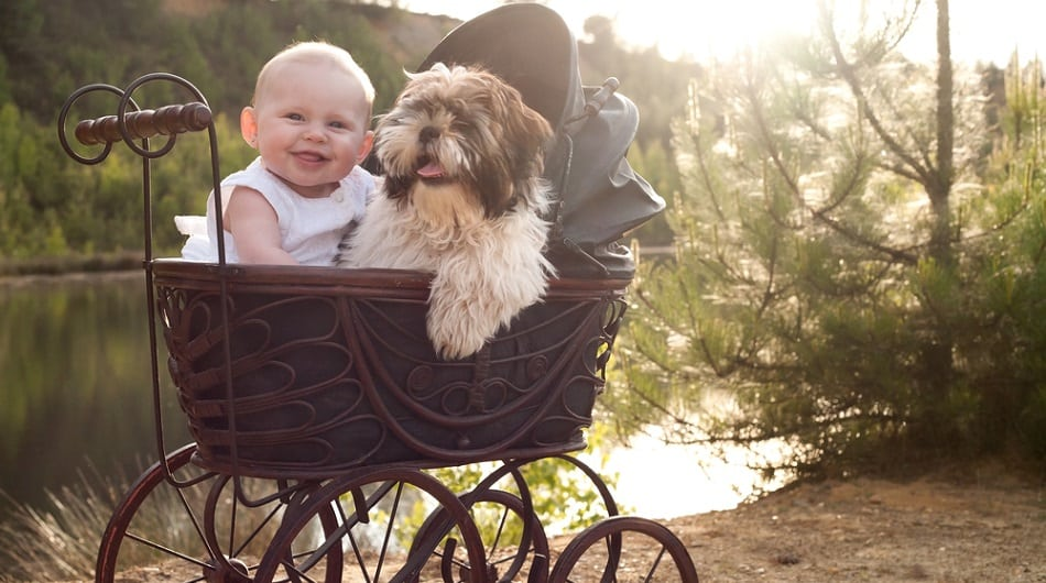 baby and dog in buggy