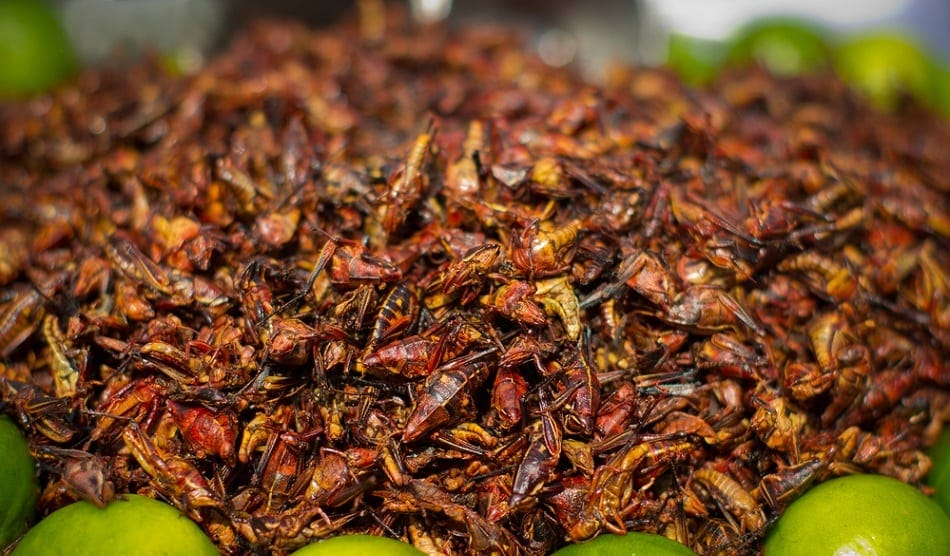 fried grasshoppers for sale