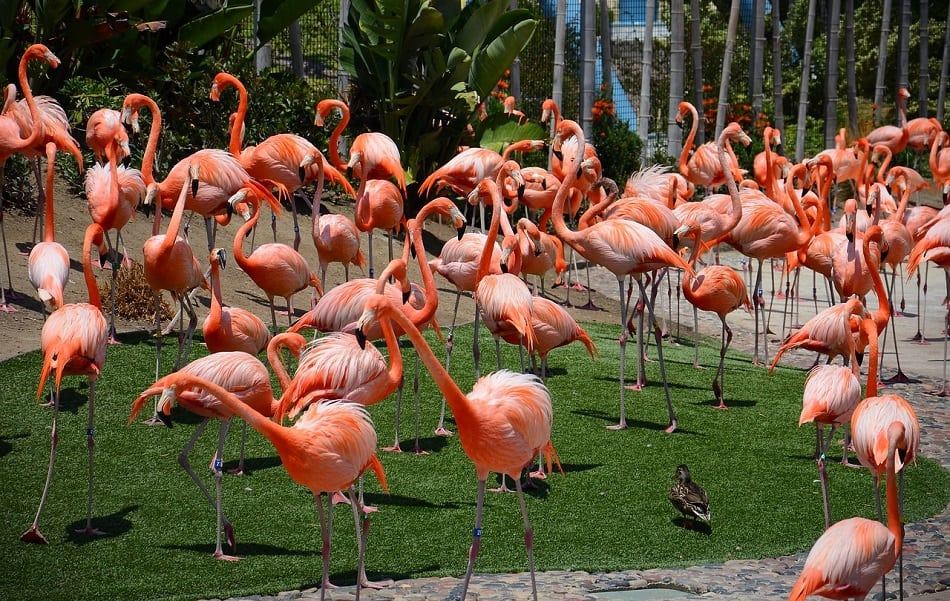 San Diego Zoo Animals