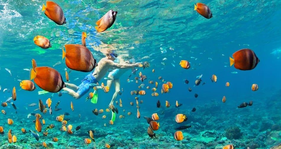 anguilla snorkling