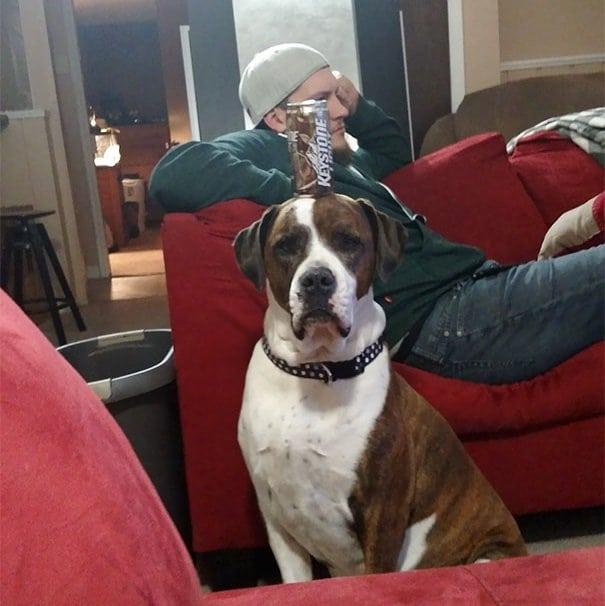 servant dog