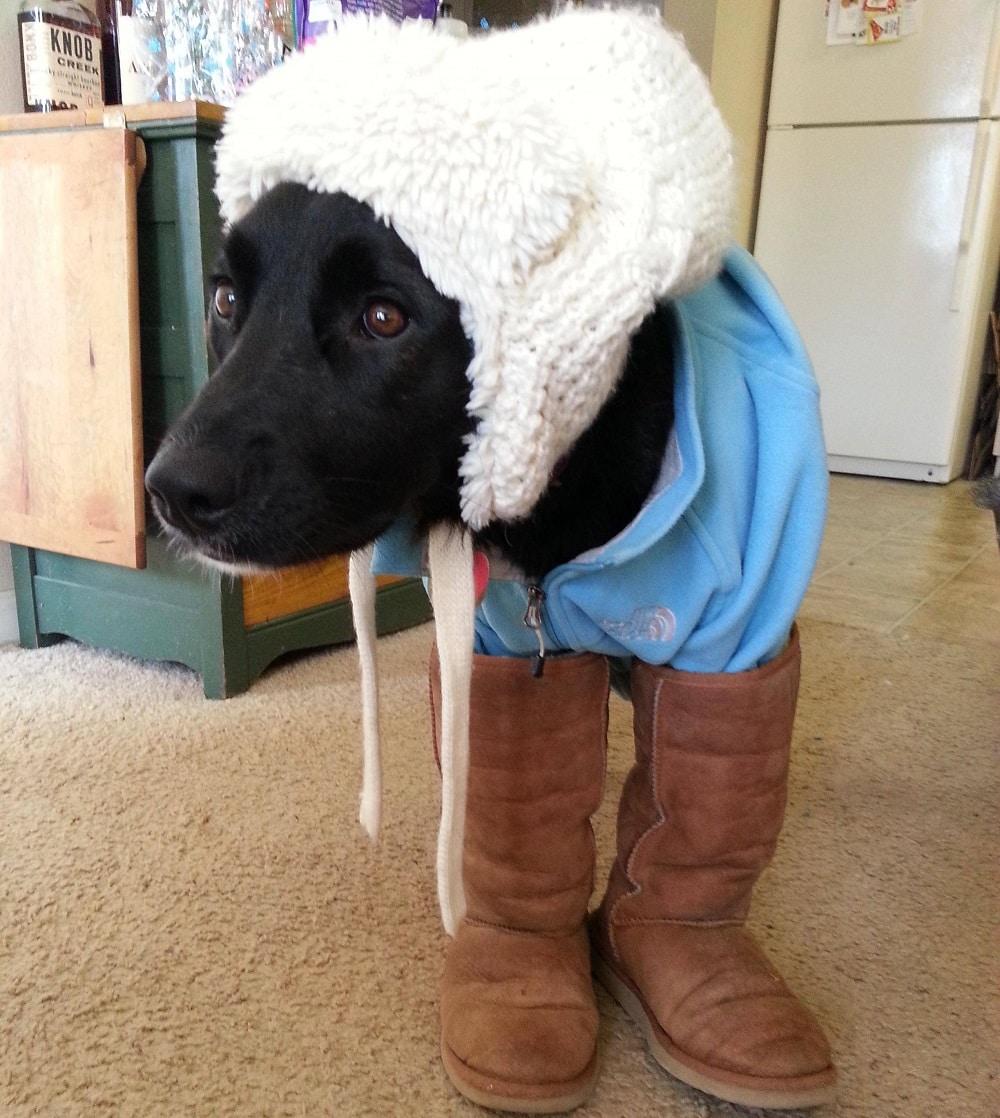 boot dog