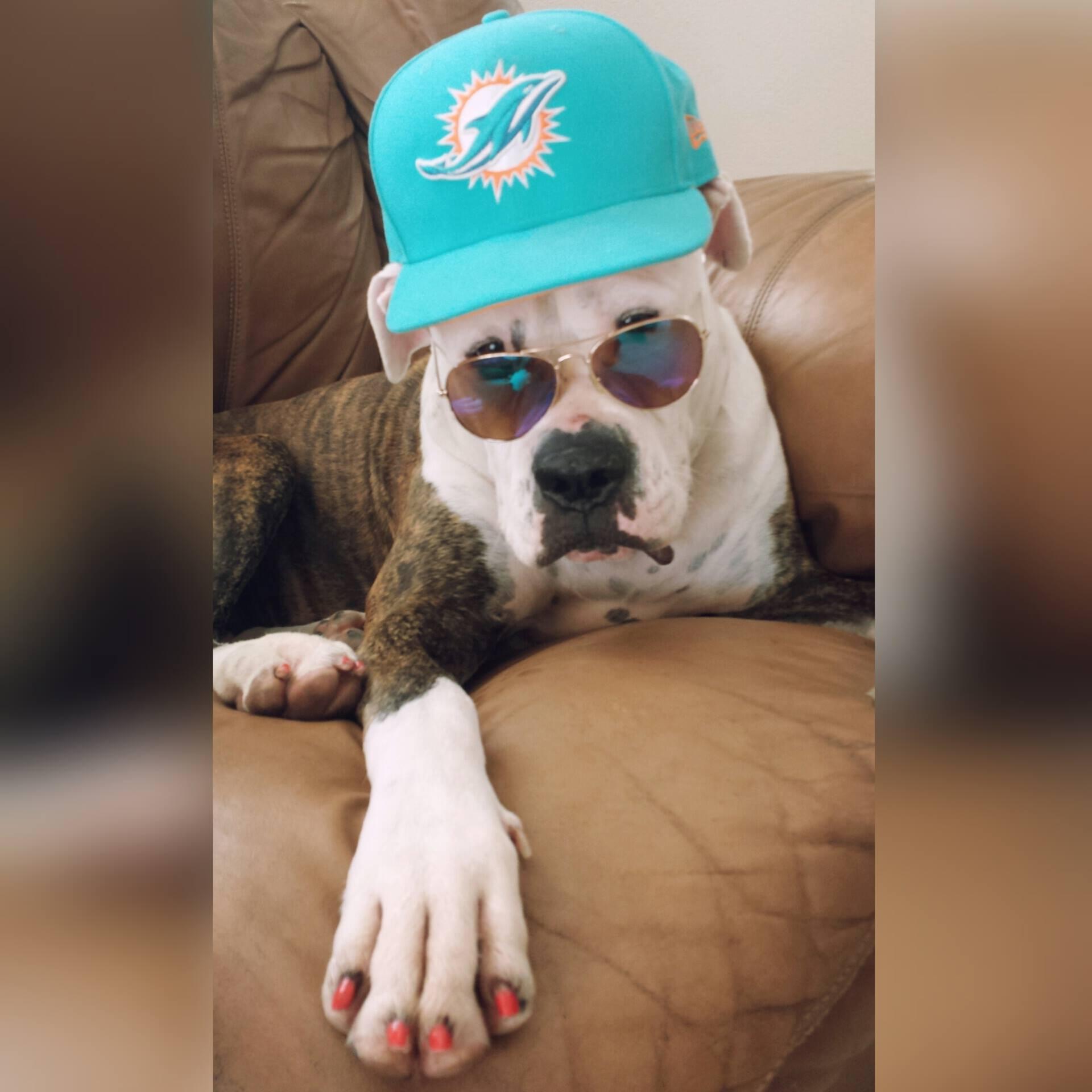 sports dog