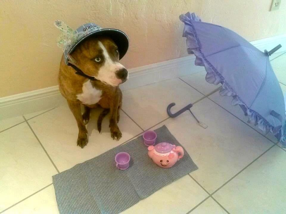 tea party for pooch